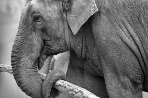 Elephant Symbol and Dream Meaning | Journey Into Dreams