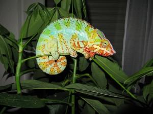 chameleon dream meaning