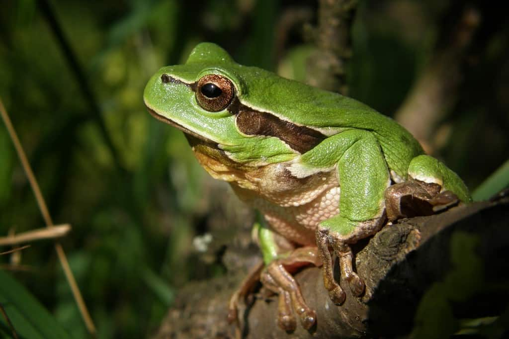 frog dream meaning