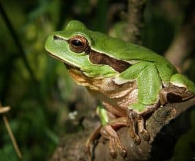 Frog Spirit Animal & Dream Symbol Meaning