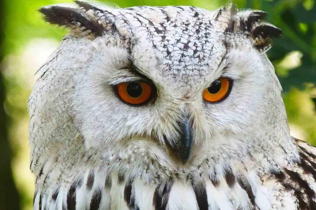 owl spirit animal dream meaning