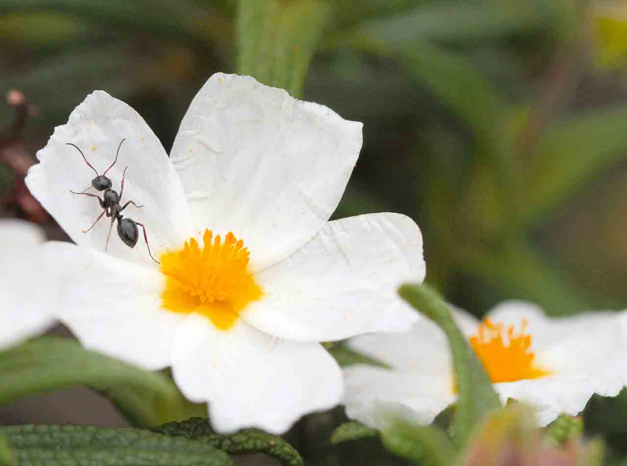 ant spirit animal dream meaning