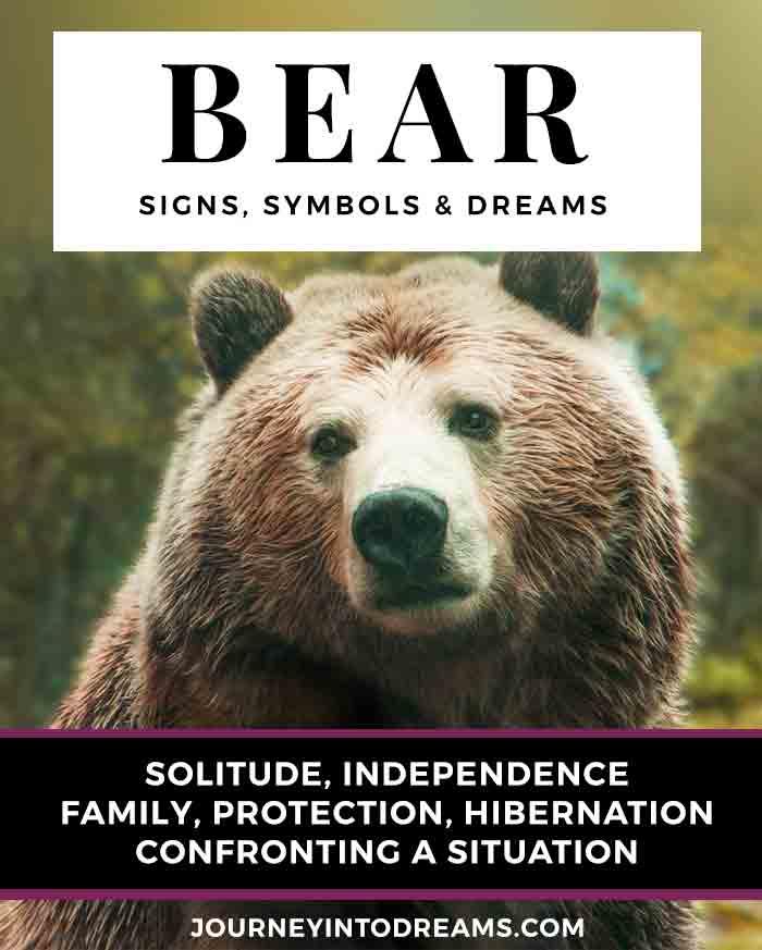 bear dream meaning symbols