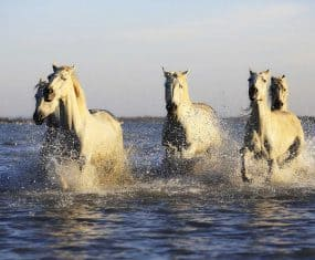 Horse Dream Meaning & Spirit Animal