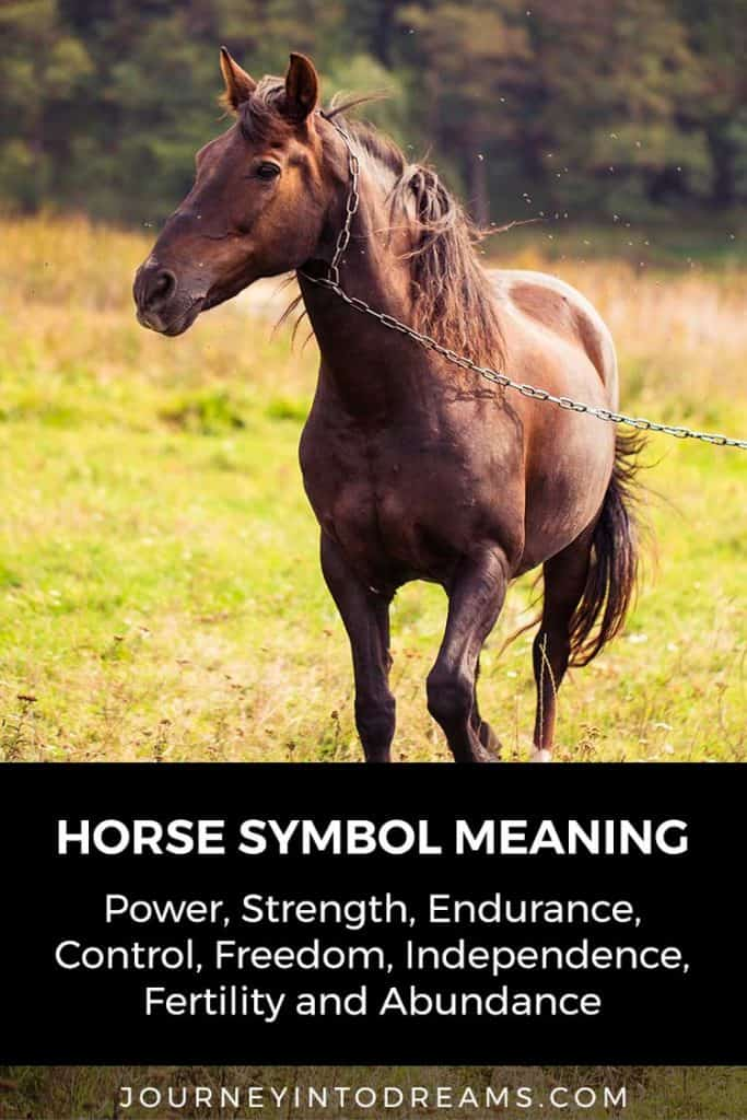 Horse Dream Meaning and Spirit Animal | Dream Dictionary