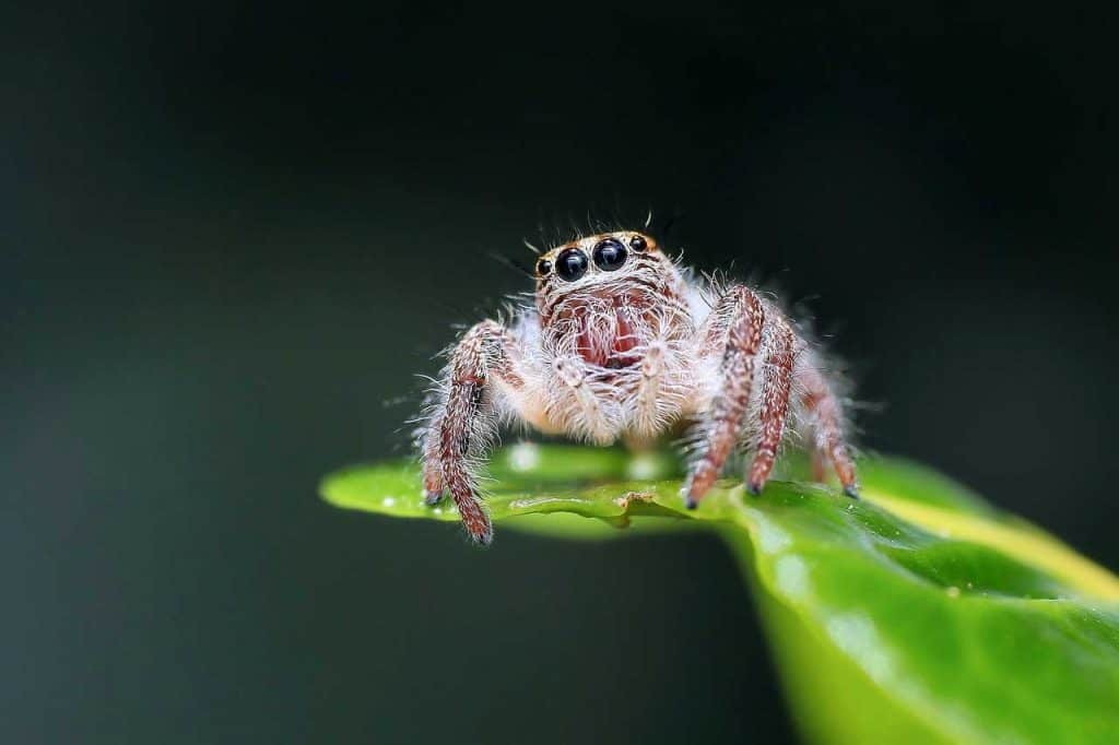 spider dreams meanings and animal spirit