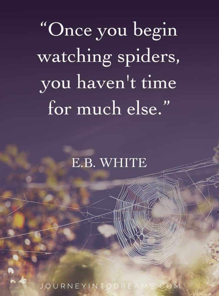 eb white spider quote