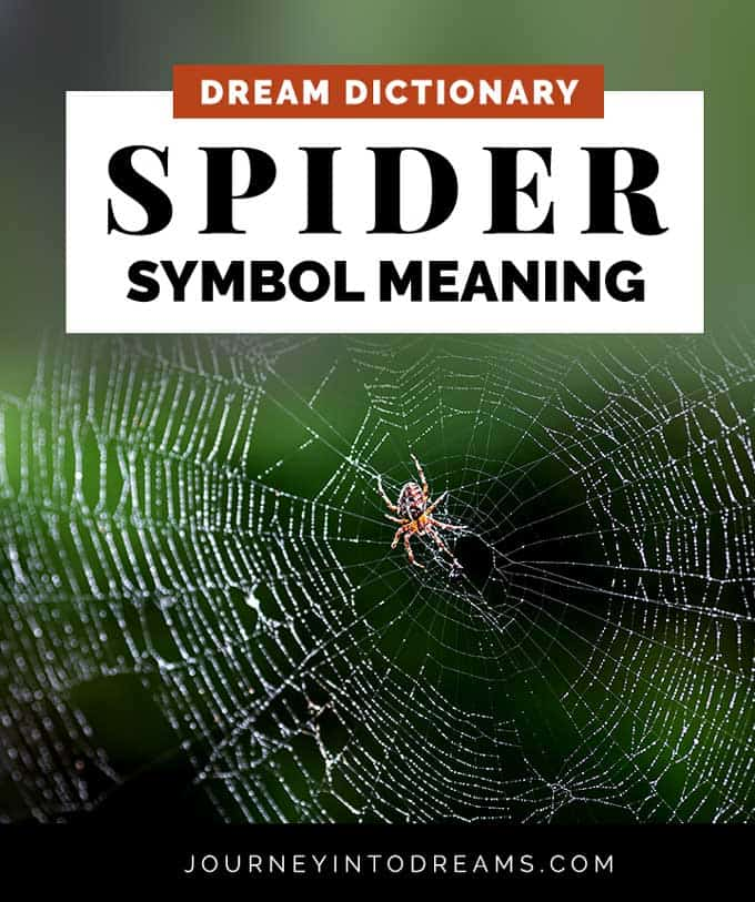 spider dream symbol meaning