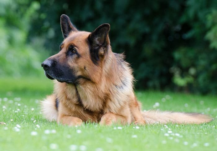 dog guard dream meaning