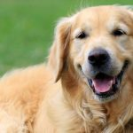 meaning of dream about dogs