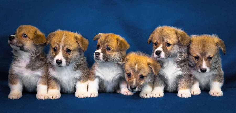 puppy dream meaning