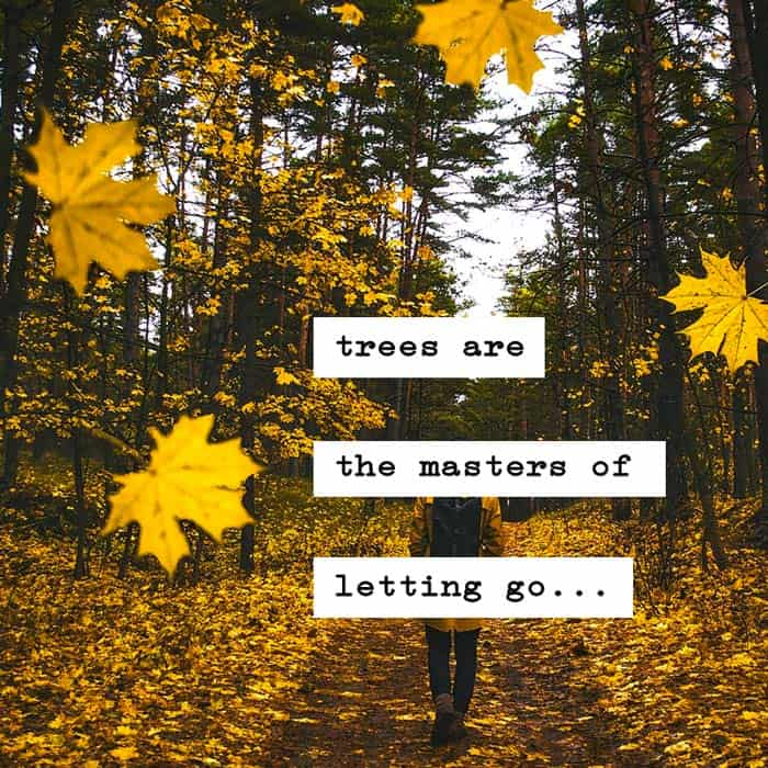 trees are the masters of letting go