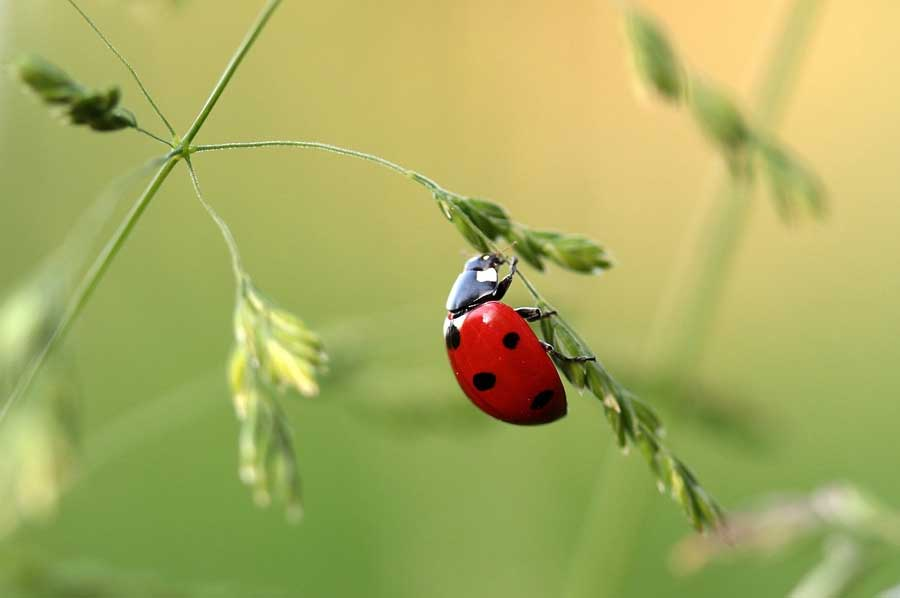 insects dream ladybug