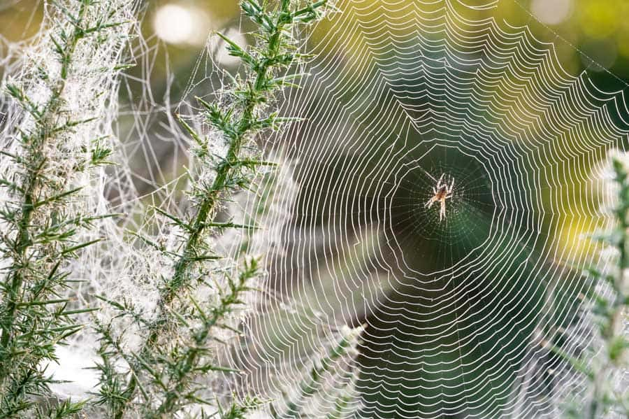 spiritual meaning of spider webs