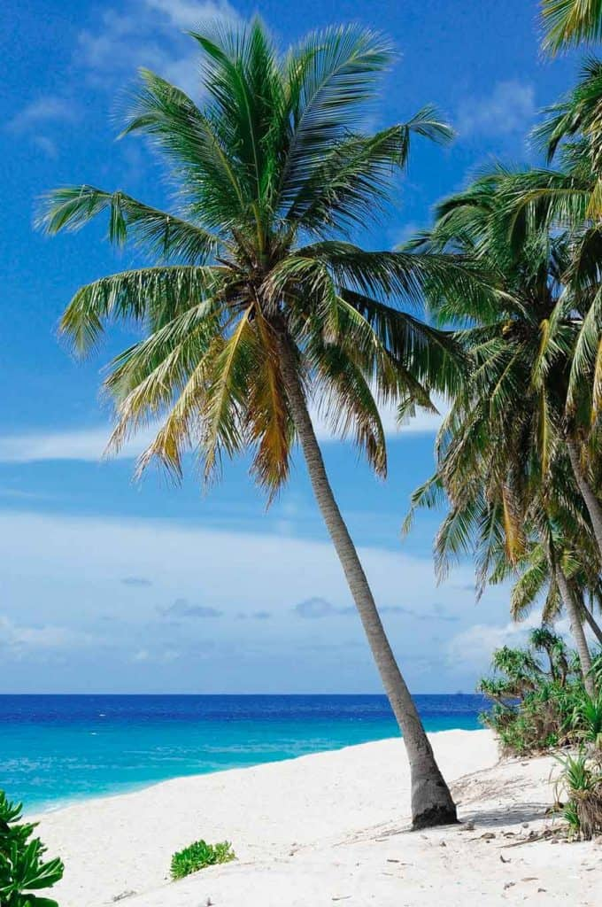 tropical island beach with palm tree