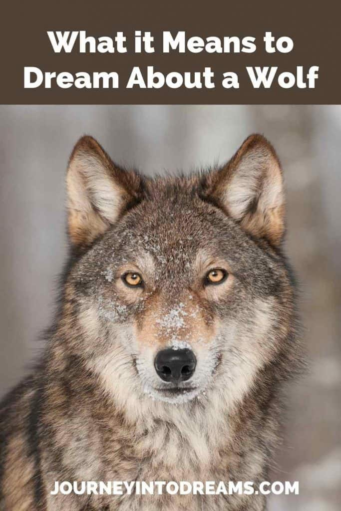 what it means to dream about a wolf