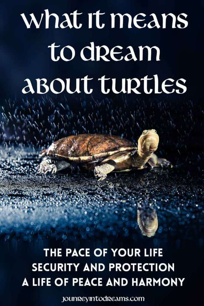 What it means to Dream about Turtles