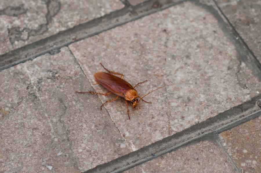 cockroach dream symbolism