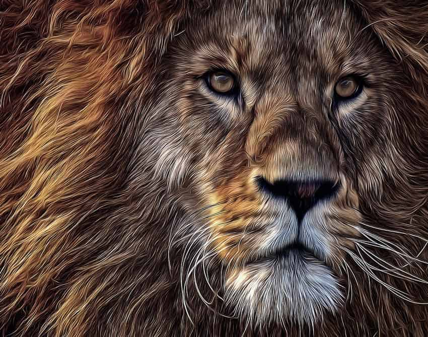fearless lion