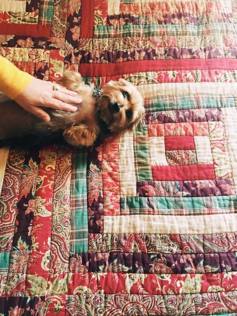A hand pets a small dog lying face-up on a quilt.