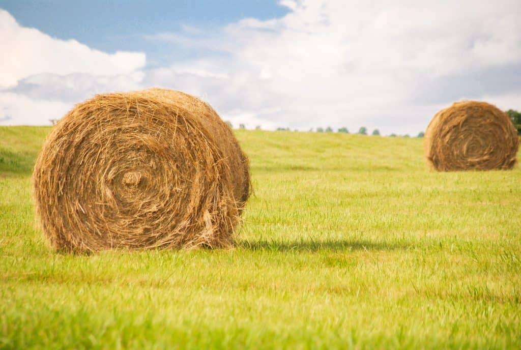 Haystacks and Sunshine Virginia