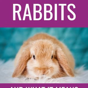 Rabbits Symbolism and Dream Meaning